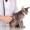 Ветеринарные клиники в Белом Городке